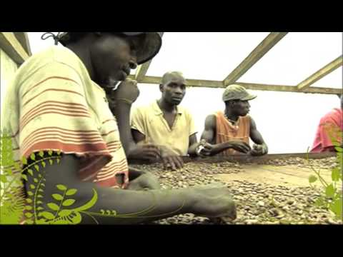 The Business of Food - Sao Tome: Cocoa Comes Back