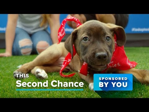 Petsmart Charities Inc America S Charities