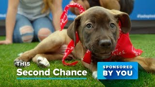 PetSmart Charities Sponsored by You thumbnail