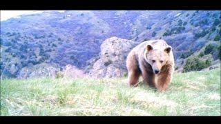 بالفيديو.. الدب السوري يظهر في لبنان للمرة الأولى بعد 60 عاماً