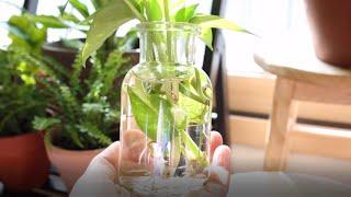 흙없이 물에서 자라는 수경재배식물 15가지