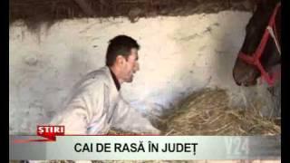 Repeat youtube video cai de rasa in judet    www v24tv