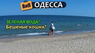 Море в Одессе 2019 | Зеленая вода? Карантин? Бешеная кошка? Водоросли? Холодно?