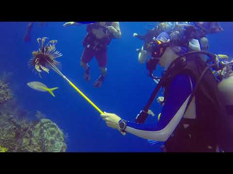 Belize Spearfishing First Time Scuba Diving (invasive Species: Lionfish)