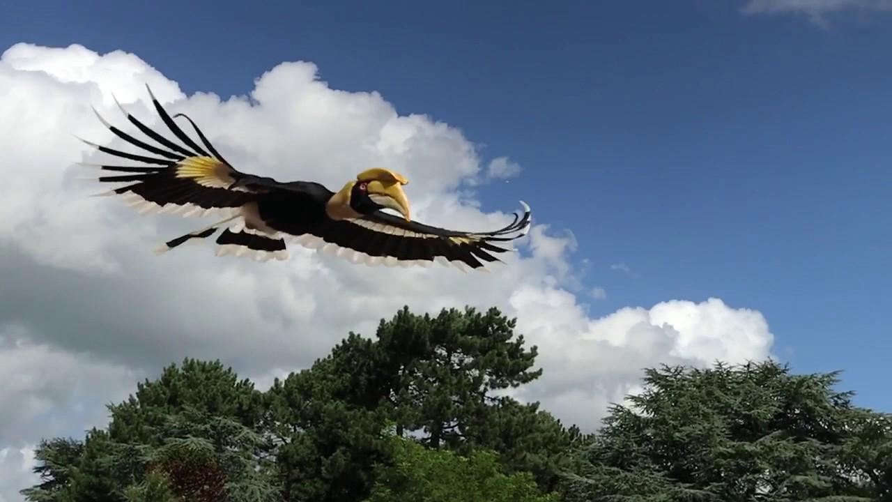 Hornbill Fly By In Slowmotion Youtube