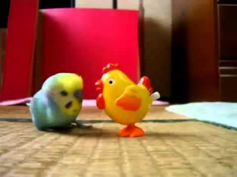 Подборка Приколов С Попугаями (часть 1)