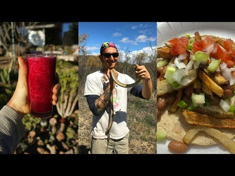 Beet Juice, Wild Snakes and Vegan Tacos | Digital Nomad Day In The Life Mexico