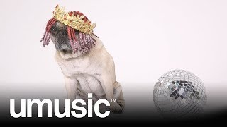 Download Cedric The Pug Vs. Lil Yachty