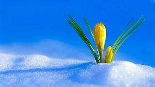 """""""The First Day of Spring"""" by Leroy Anderson"""