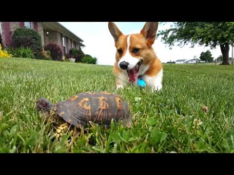 Dog Meets Turtle