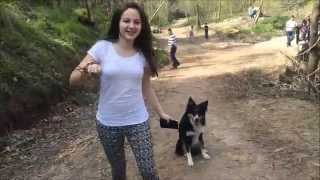 Repeat youtube video Pharrell Williams - Happy  ( Happy Border Collie )