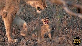 safariLIVE của safariLIVE 2 giờ trước 4.644 lượt xem