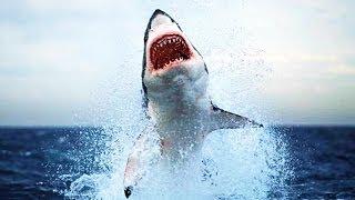Самые опасные акулы,National Geographic