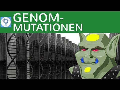 Genommutationen: Trisomie, Monosomie, Geschlechts-Anomalien, Down-Syndrom - 3 | Genetik