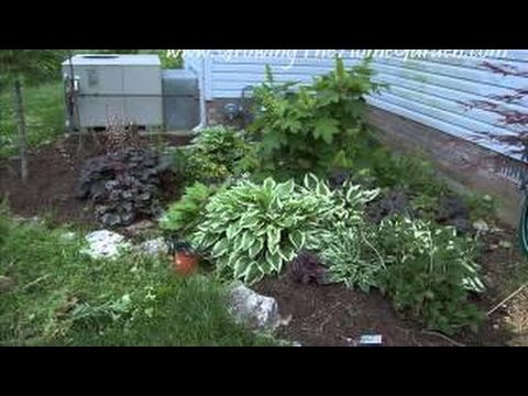 Plants For A Shaded Garden At Home With P Allen Smith Shady