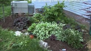 Plants For A Shaded Garden | At Home With P. Allen Smith - Shady Garden Ideas