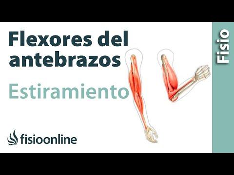 estiramiento-de-los-músculos-flexores-del-antebrazo