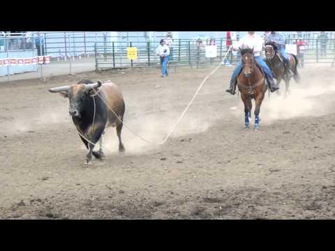 Tillamook Bullriding 2013