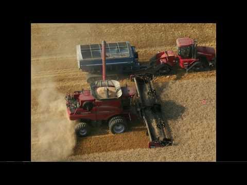 Maximum Wheat Yields