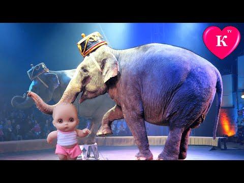 Цирк Шапито Видео 2015