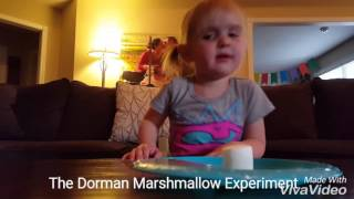 The Dorman Marshmallow Experiment