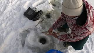 Зимняя рыбалка на щуку 2021г Пытаемся разводить рыб Щука с одного водоёма на другой водоём