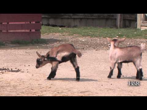 New animals at Scovill Zoo
