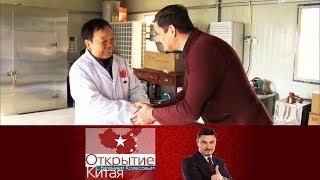 Открытие Китая. Традиционная китайская медицина. Больница. Выпуск от 05.03.2017