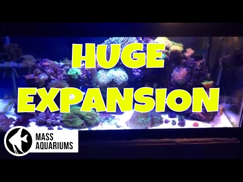 """Feeding Reef Roids PLUS """"A HUGE EXPANSION"""" for MAB!"""
