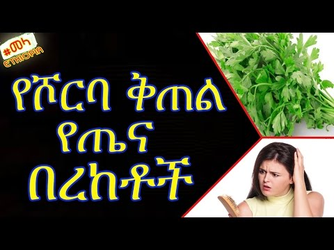 ETHIOPIA - የሾርባ ቅጠል የጤና በረከቶች | Parsley Health Benefits and Side Effects in Amharic