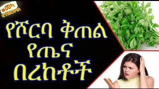 Parsley Health Benefits and Side Effects - የሾርባ ቅጠል የጤና በረከቶች