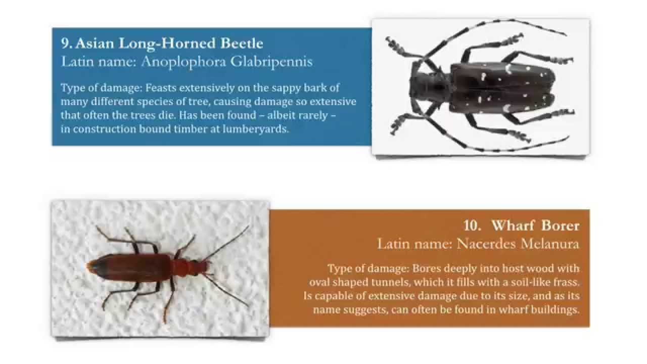 Woodworm Identification: 11 Types of Wood Boring Insect