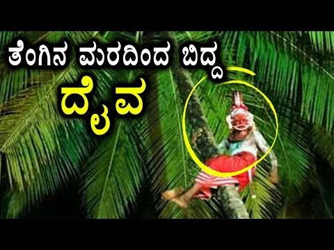 Bhuta kola Dari Falls From Coconut Tree During Bhuta kola Celebration In Kerala | Oneindia Kannada