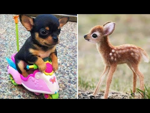 Baby Animals  Funny Cats and Dogs Videos Compilation (2020) Perros y Gatos Recopilacin #1