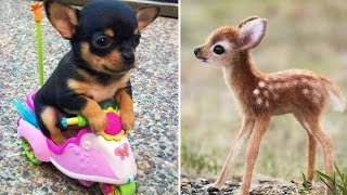 Baby Animals 🔴 Funny Cats and Dogs Videos Compilation (2020) Perros y Gatos Recopilación #1