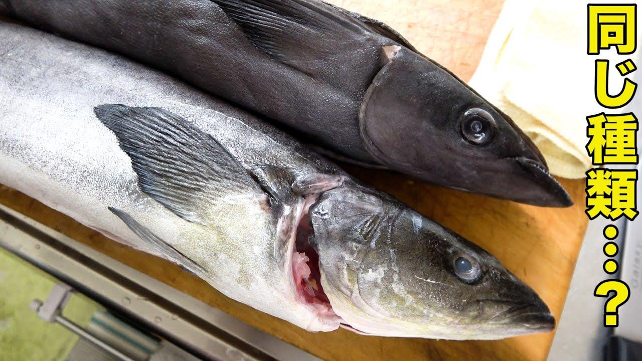 このお魚おいしいの?そっくりな2匹のお魚を食べ比べてみました!!!
