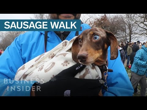 1,000 Dachshunds Gathered For A Mass Walk In London