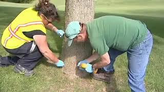 Customers Tree Health Care Mainenance
