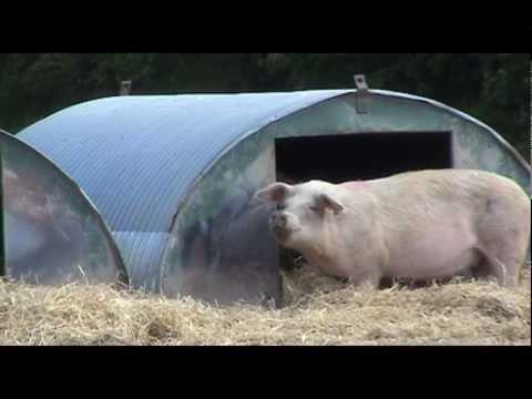 Dalgarnock Pig Farm