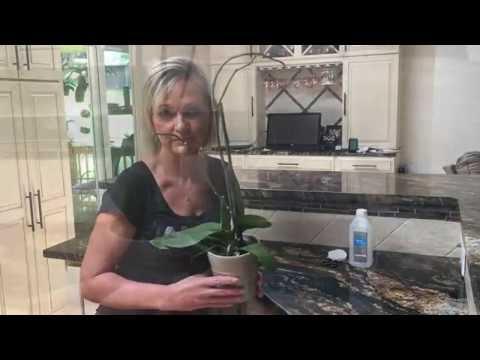 Что делать с орхидеей после того как она отцвела.
