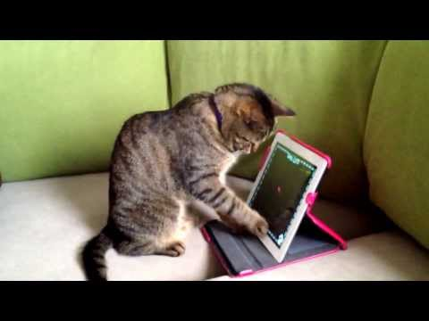 Smart cat playing laser pointer game on iPad part1