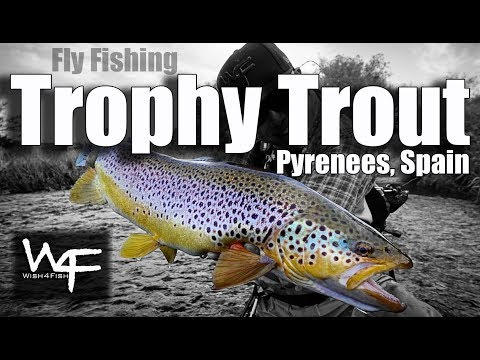 W4F - Fly Fishing Trophy Trout In Pyrenees, Spain