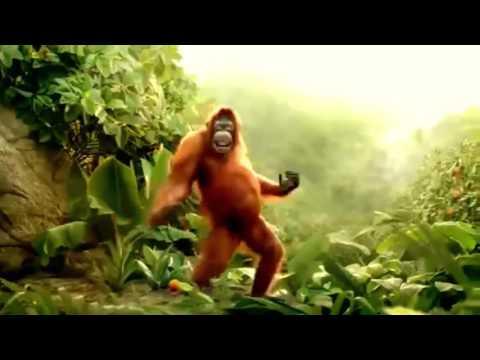 Hoch die Hände Wochenende - Affe