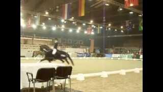 Ereronde Grand Prix ICNN Drachten 4-01-2013 Edward Gal & co