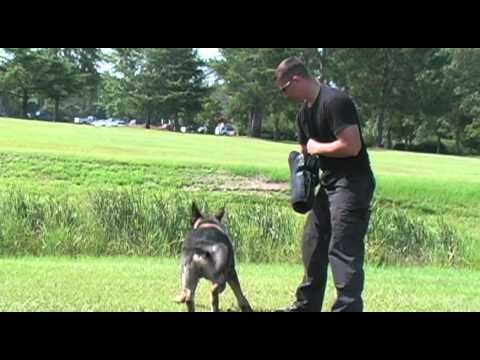 Pitt County Sheriff's Office K-9 Unit