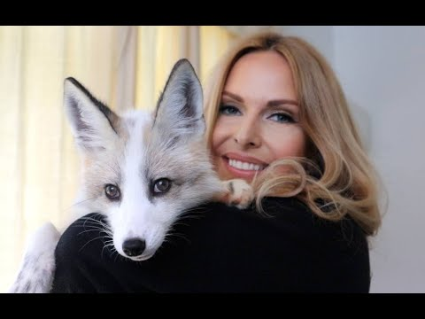 SO YOU WANT A PET FOX? - The Ultimate Guide / Animal Watch