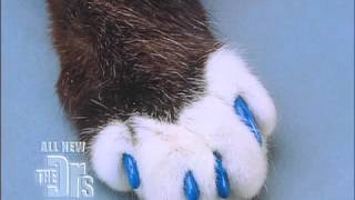 Soft Paws Medical Course