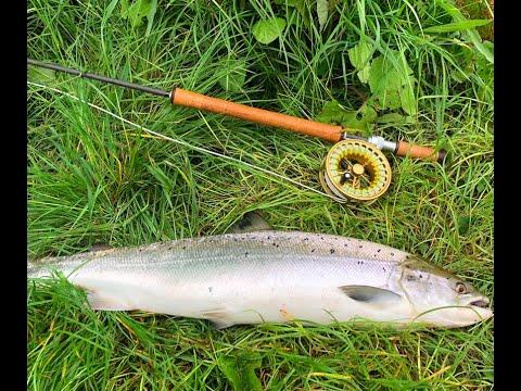 Salmon On The Fly On The River Garnock, Kilwinning