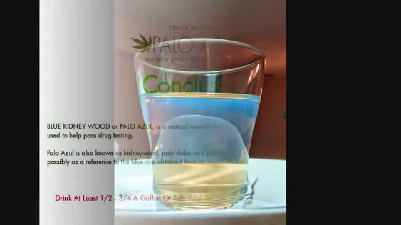 How To Pass A Drug Test - Home Drug Testing - Palo Azul - 24 Hour - Full  Drug Test Kit - FOOL PROOF