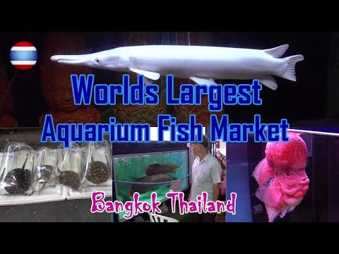 Aquarium Fish Market WORLD'S LARGEST Bangkok Part 1